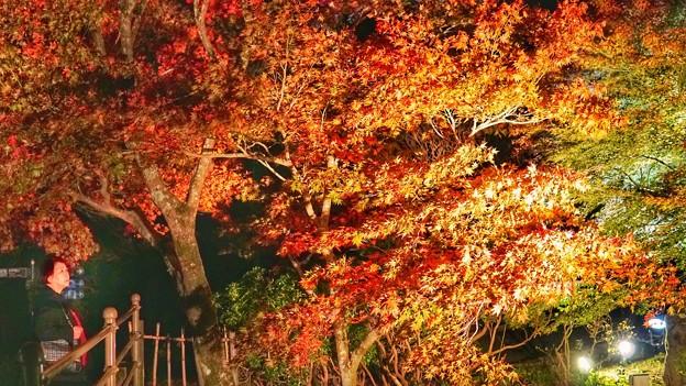 熱海梅園紅葉まつり6