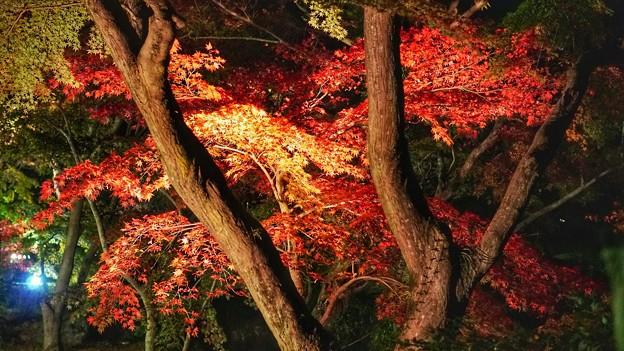 熱海梅園紅葉まつり8