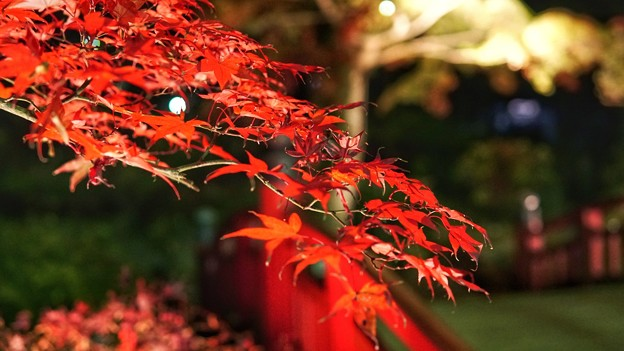 熱海梅園紅葉まつり10