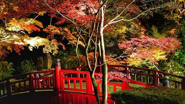 熱海梅園紅葉まつり12