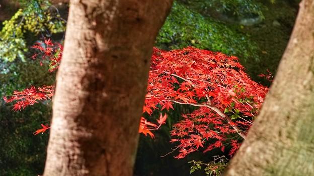 熱海梅園紅葉まつり13