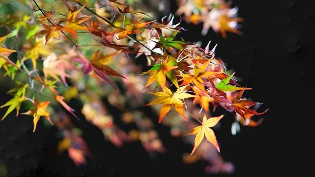 熱海梅園紅葉まつり14