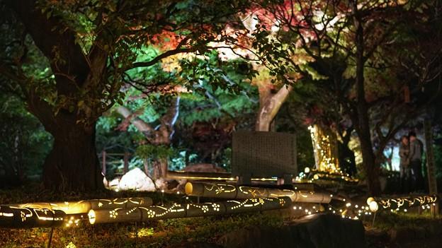 熱海梅園紅葉まつり16