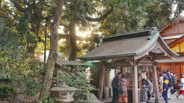 木漏れ日と川越氷川神社 DSC02291-01