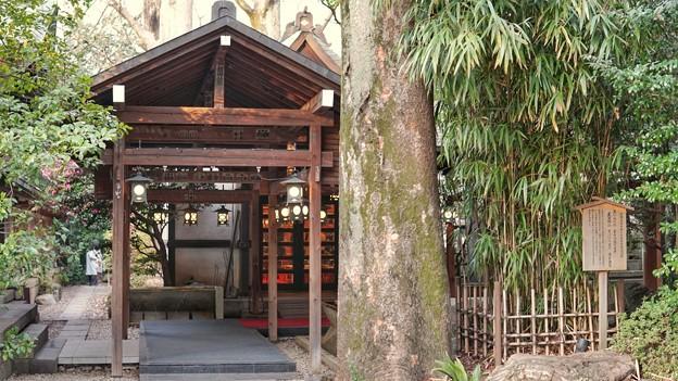 川越氷川神社 DSC02294-01