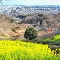 金沢自然動物園 菜の花畑と遠い海