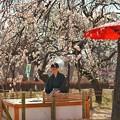 Photos: TON03412-01郷土の森梅まつり