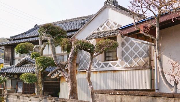 TON04218-01花畑と桜並木と伊豆の旅