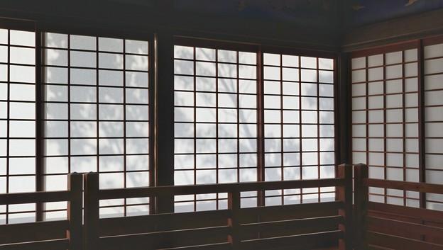 TON04244-01花畑と桜並木と伊豆の旅