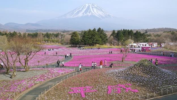TON04631富士芝桜まつり