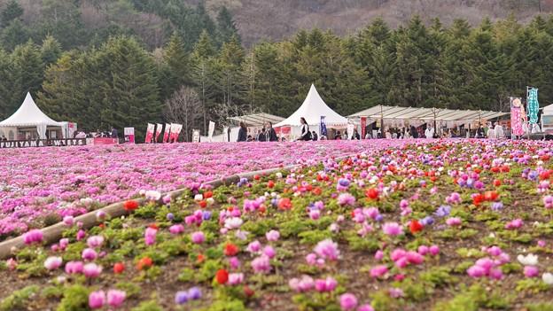 TON04662富士芝桜まつり