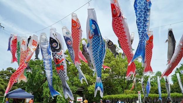 TON04878白幡神社(藤沢)