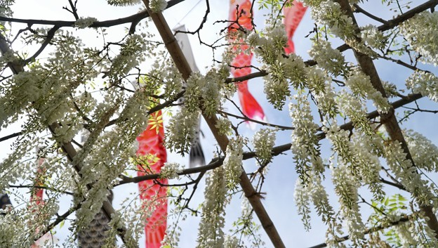 TON04910白幡神社(藤沢)