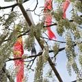 Photos: TON04910白幡神社(藤沢)