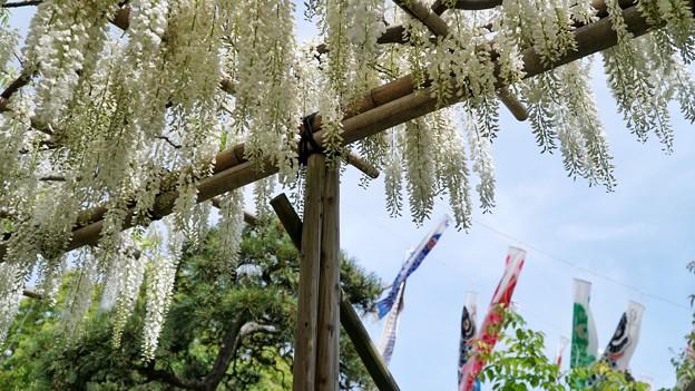 TON04923白幡神社(藤沢)