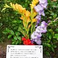 Photos: TON05452七夕&birthday2019