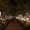 Photos: TON05733鎌倉ぼんぼり祭り