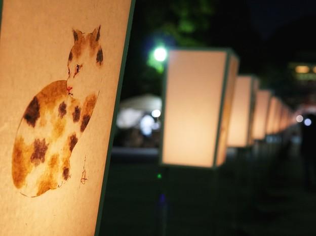 TON05738鎌倉ぼんぼり祭り