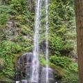 Photos: TON05909夕日の滝