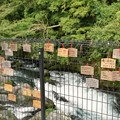 Photos: TON06448白糸の滝