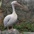 TON06784金沢動物園(動物園)