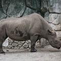 TON06785金沢動物園(動物園)