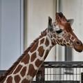 TON06791金沢動物園(動物園)