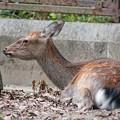 TON06807金沢動物園(動物園)