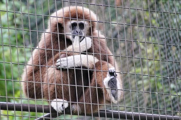 TON06815金沢動物園(動物園)