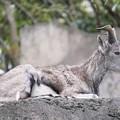 TON06819金沢動物園(動物園)