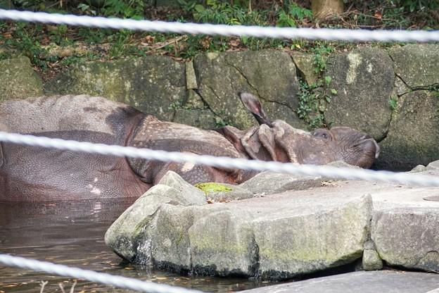 TON06822金沢動物園(動物園)