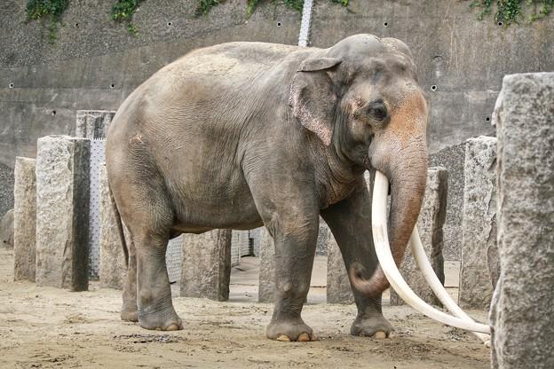 TON06841金沢動物園(動物園)
