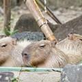 TON06881金沢動物園(動物園)