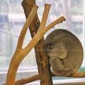 TON06950金沢動物園(動物園)