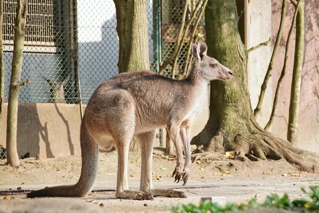 TON06956金沢動物園(動物園)