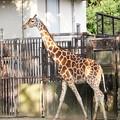 TON06966金沢動物園(動物園)