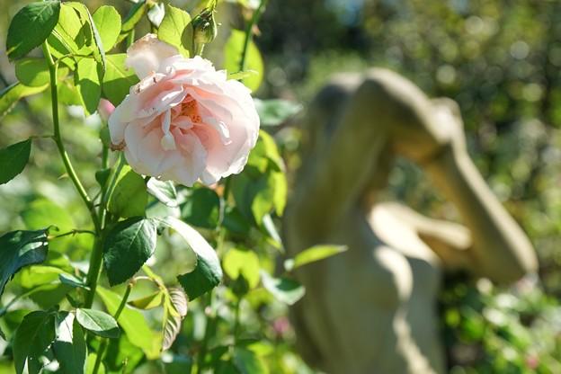 TON07287初秋の花菜ガーデン