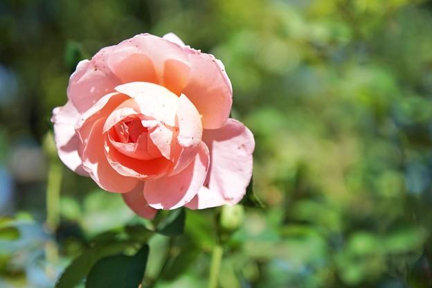 TON07295初秋の花菜ガーデン
