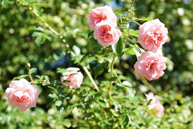 TON07302初秋の花菜ガーデン