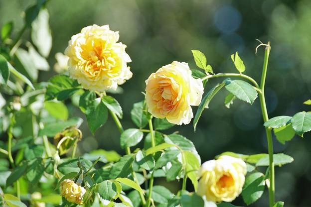 TON07307初秋の花菜ガーデン