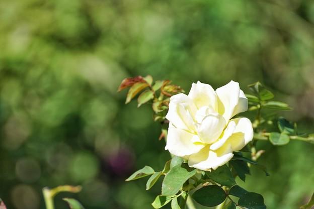 TON07314初秋の花菜ガーデン