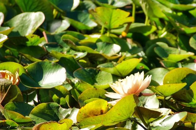 TON07336初秋の花菜ガーデン