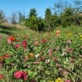 TON07354初秋の花菜ガーデン