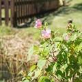 Photos: TON07358初秋の花菜ガーデン