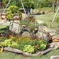 TON07367初秋の花菜ガーデン