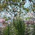 TON07379初秋の花菜ガーデン