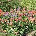 Photos: TON07386初秋の花菜ガーデン