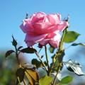 TON07392初秋の花菜ガーデン