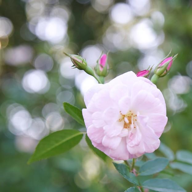TON07403初秋の花菜ガーデン
