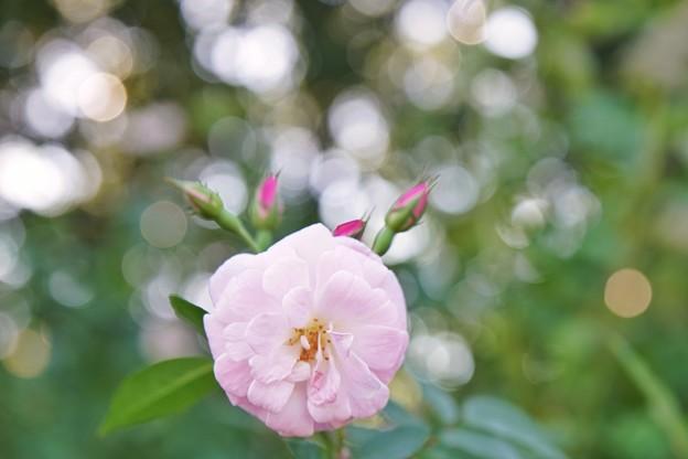 TON07404初秋の花菜ガーデン